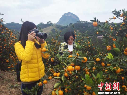 广西柑橘产业力争迈入智能化 用手机开启阀门滴灌